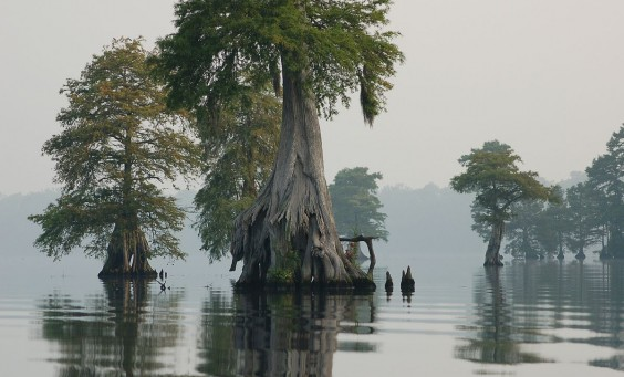 1200px-Photo_of_the_Week_-_Great_Dismal_Swamp_National_Wildlife_Refuge_(VA)_(4578425529)
