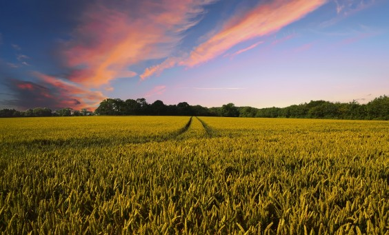 countryside-(pixabay)